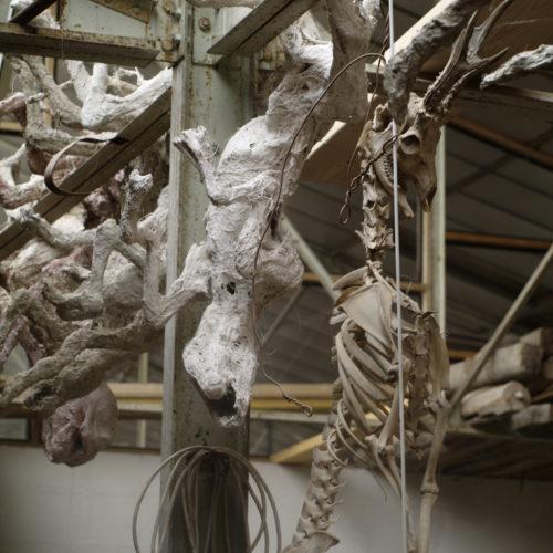 squelette de chevreuil dans atelier